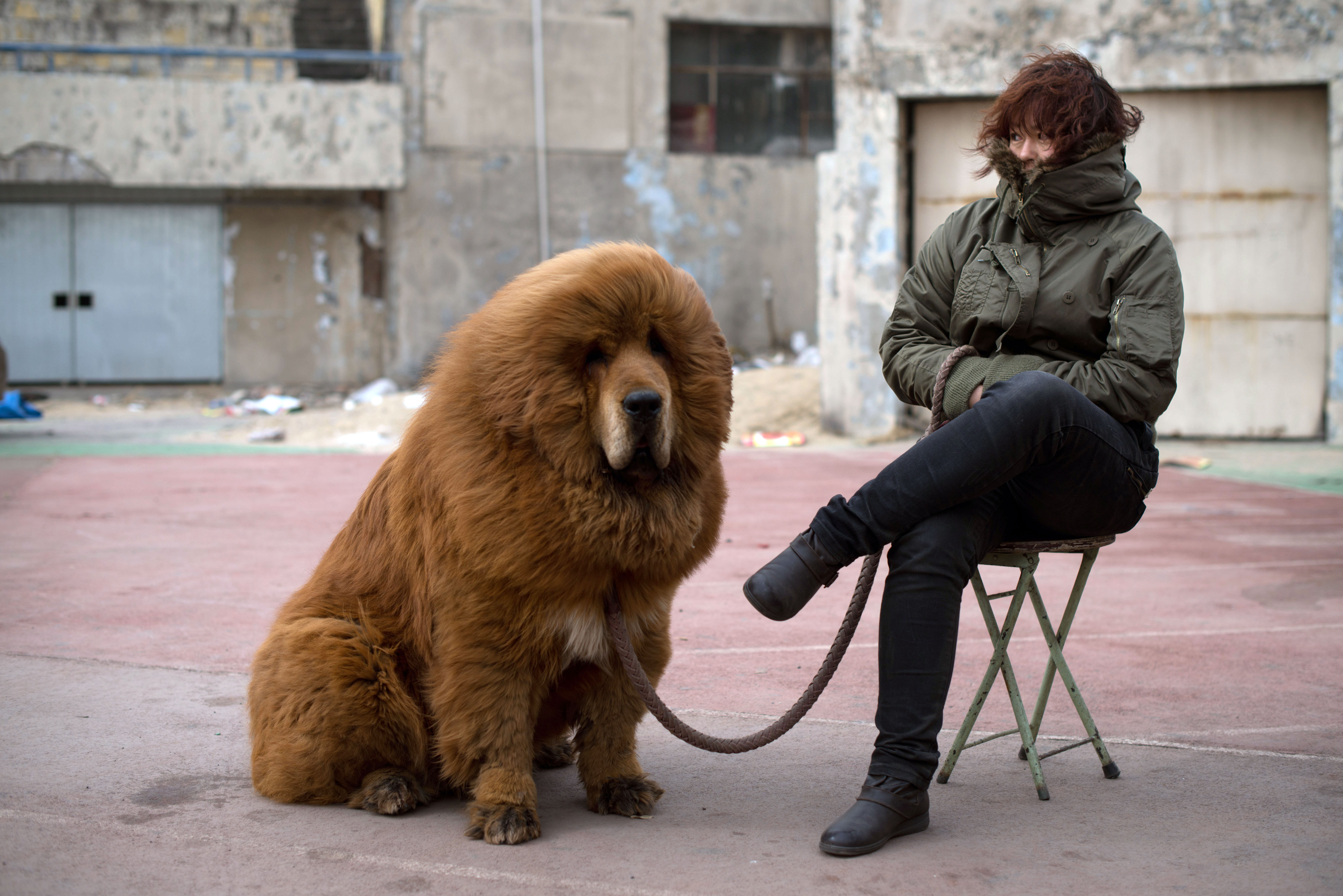 Chinese Zoo Tried to Pass Off Dog As Lion -- NYMag