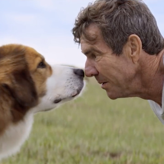 Dog S Purpose Movie Video With Dog Abuse