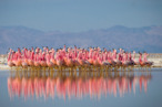 <em>Planet Earth II</em> Recap: The One With the Mountains