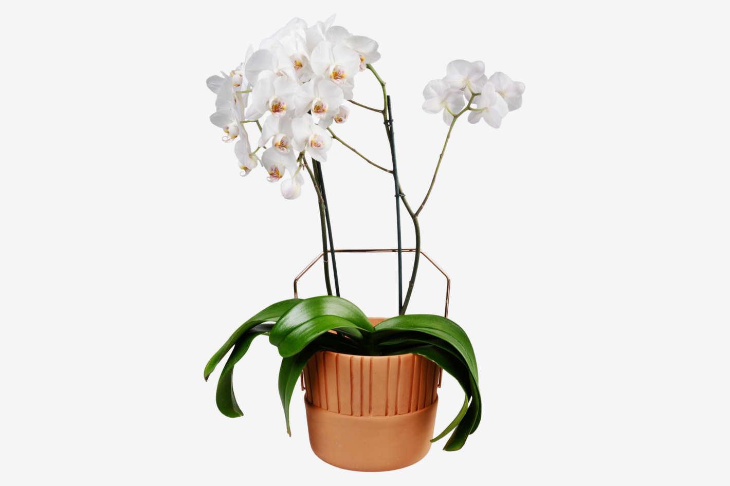 Ilaria I. Bucket Vase