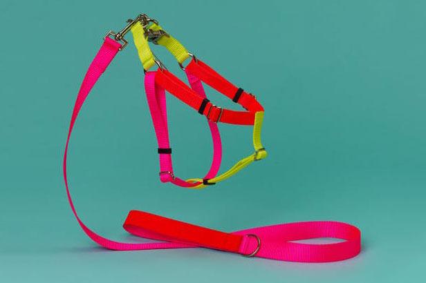Nylon Color Block Harness