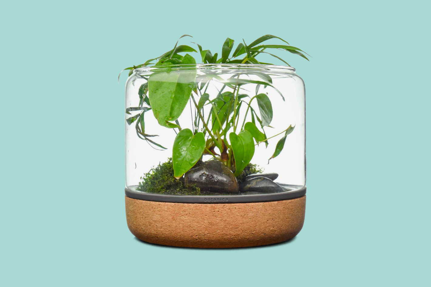 Modern Sprout Sanctuary Temperate Open Terrarium
