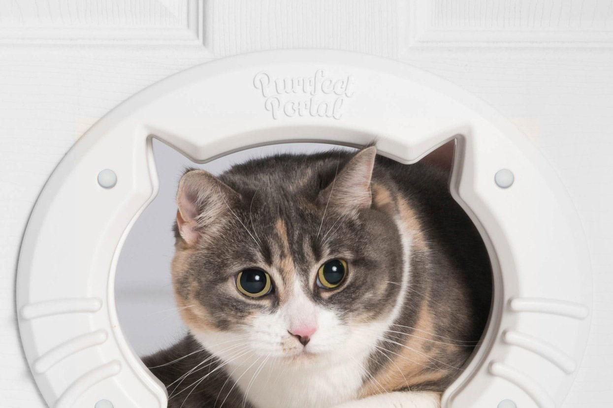 Purrfect Portal Built in Interior Pet Cat Door for Medium & Large Cats