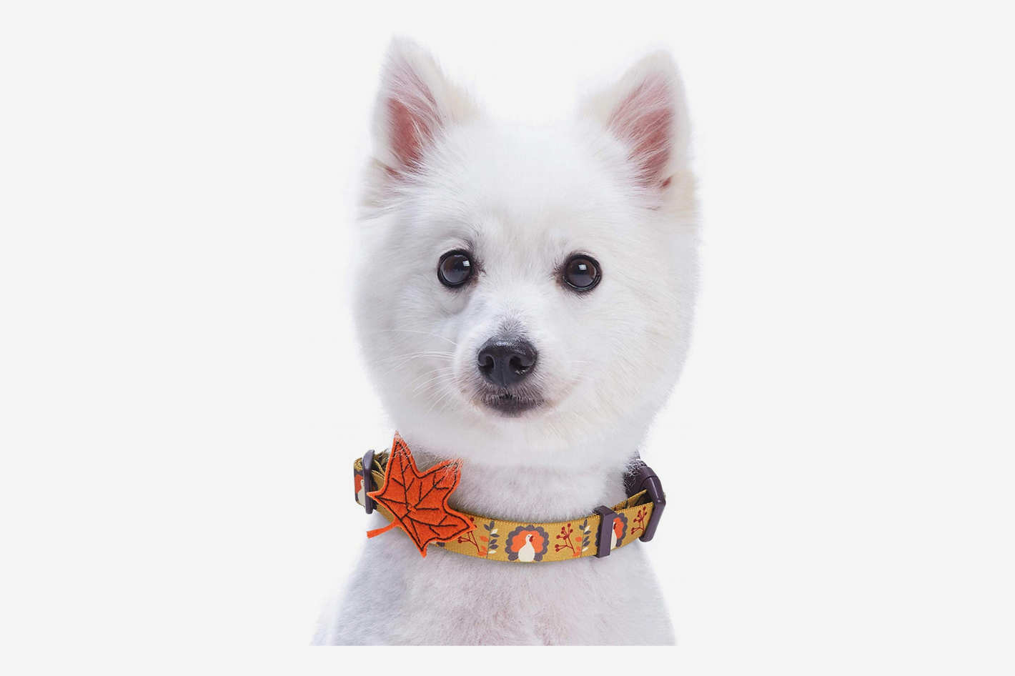 Blueberry Pet 8 Patterns Fall Halloween Thanksgiving Designer Dog Collar