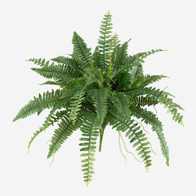 Nearly Natural Boston Fern