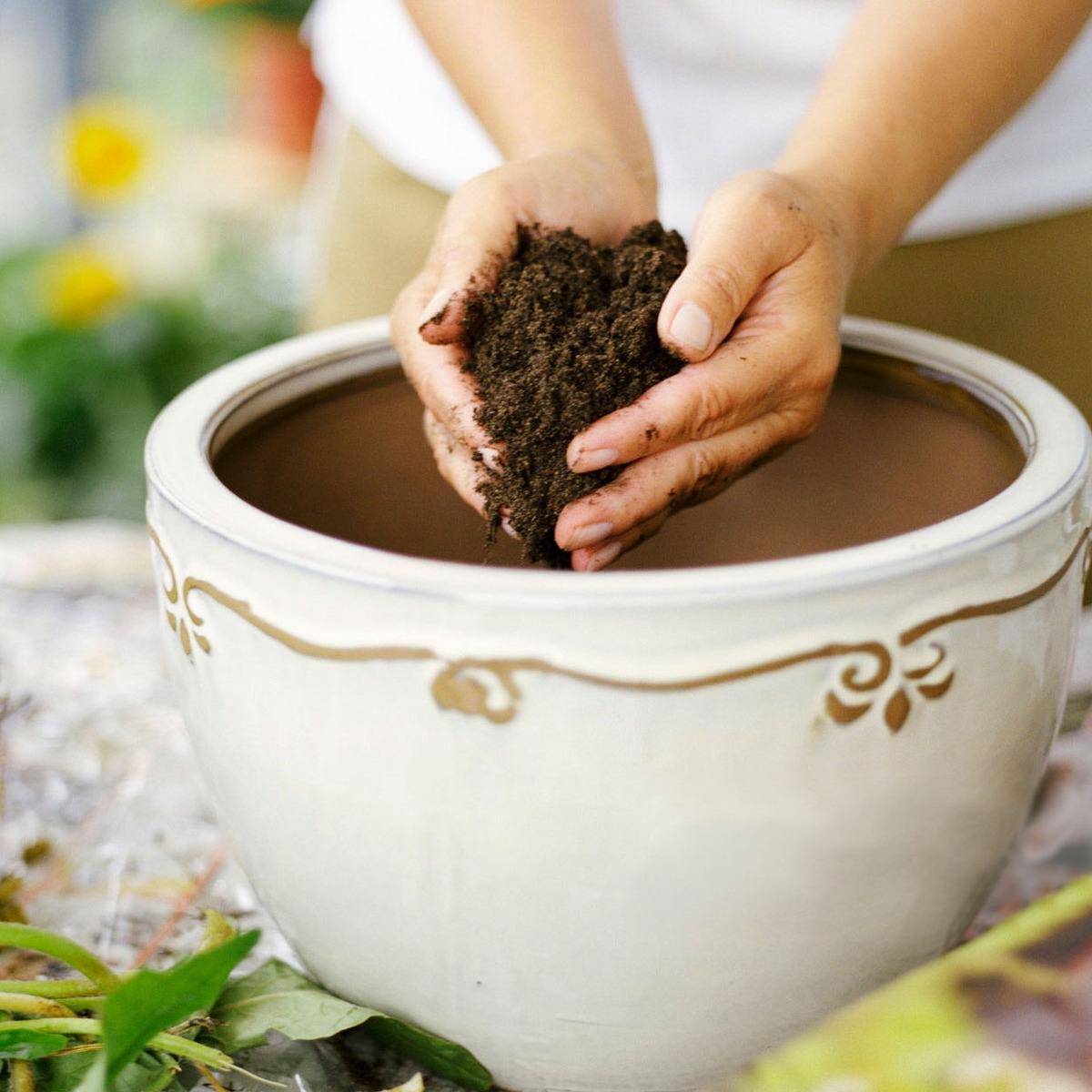 Best Potting Soil for Indoor Plants 2019