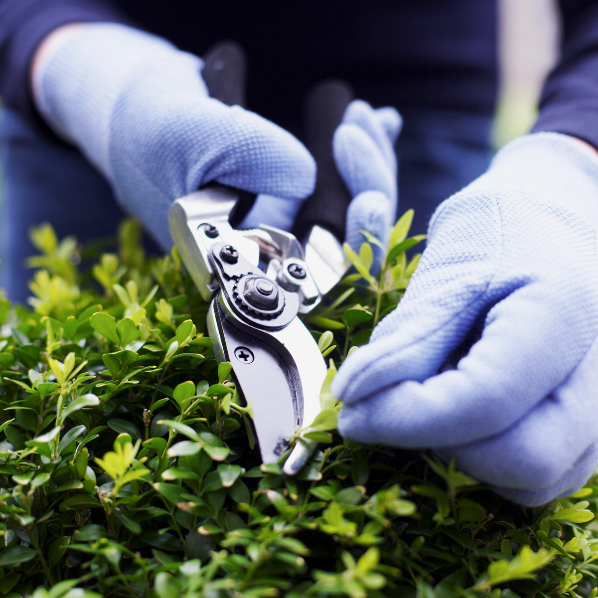 11 Best Garden Shears and Pruners: 2019