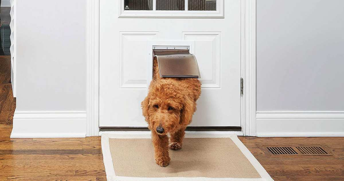 The Best Dog Doors on Amazon, According to Reviewers