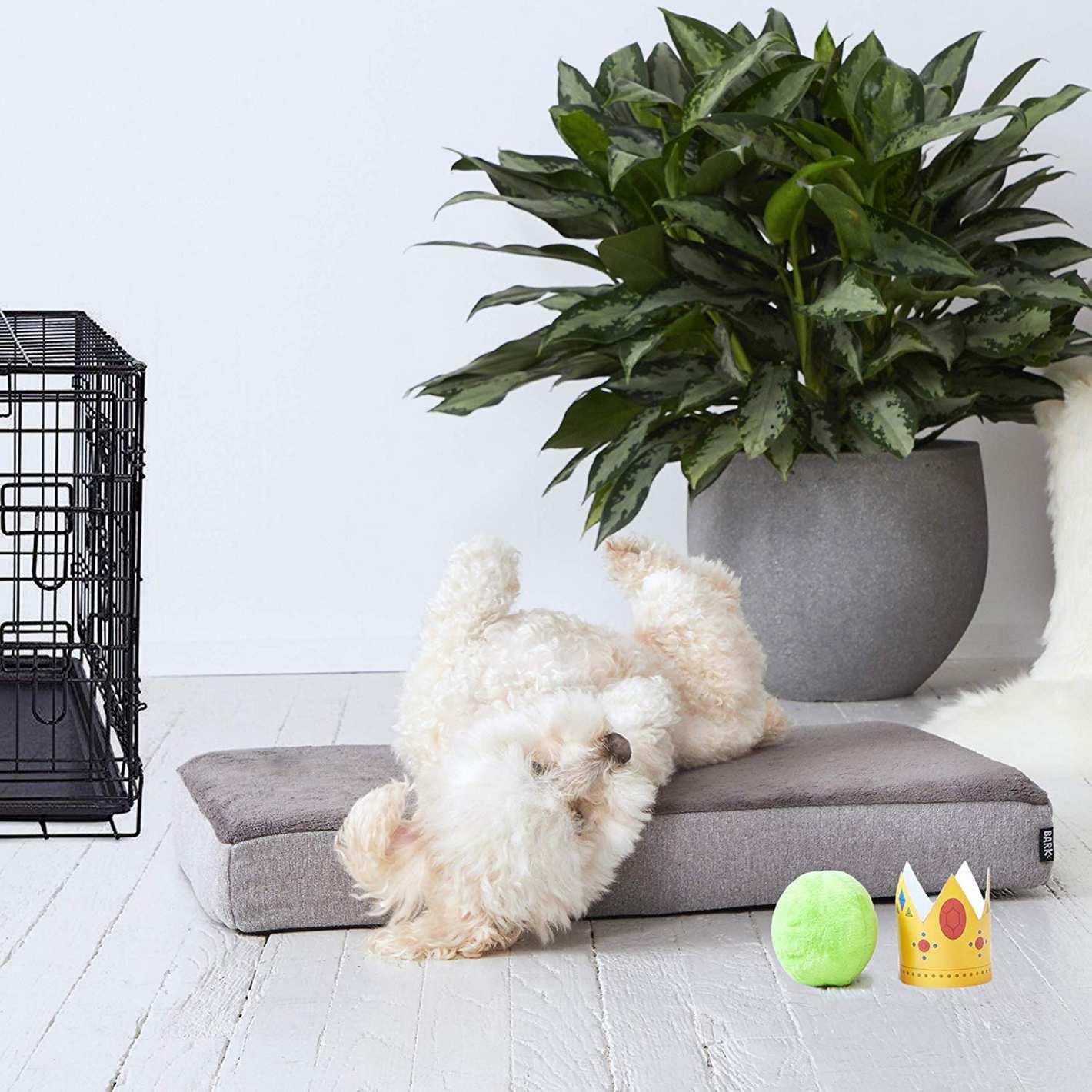 BarkBox Memory Foam Dog Bed Multiple Sizes Plush Orthopedic Joint-Relief