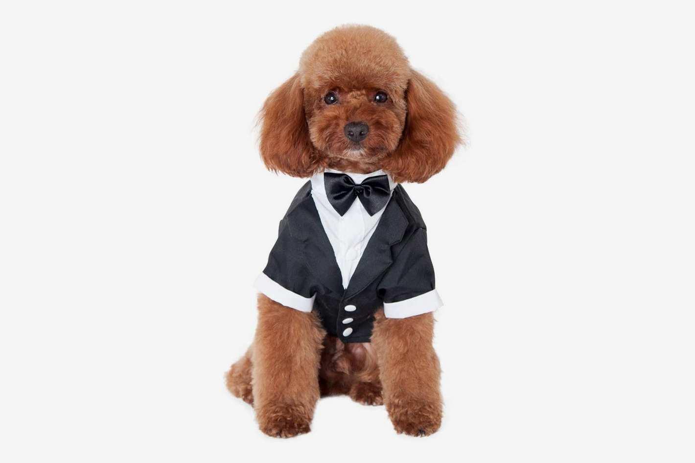Kuoser Dog Shirt Puppy Pet Small Dog Clothes