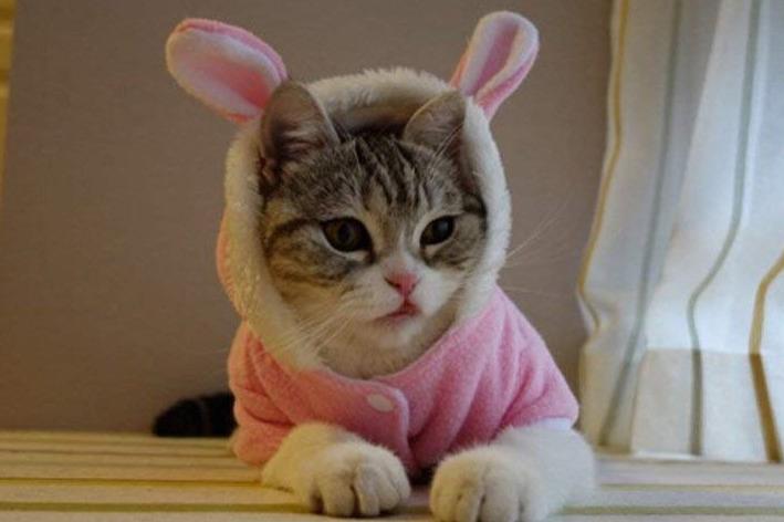 Bro'Bear Plush Rabbit Outfit with Hood & Bunny Ears