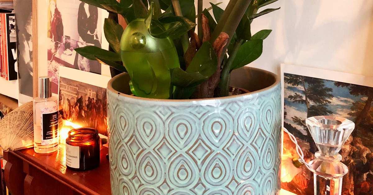 This £6 German Doodad Helps Me Keep My Many Plants Alive