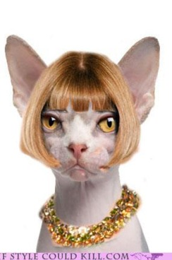 Anna in feline form.