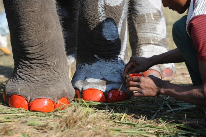 Elephants getting pedicures in Nepal.