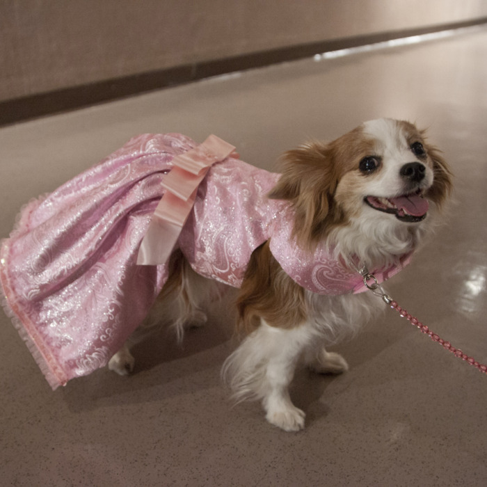The 4th Annual Pet Fashion Show