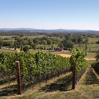 Drink and Dine in Virginia's Piedmont Region