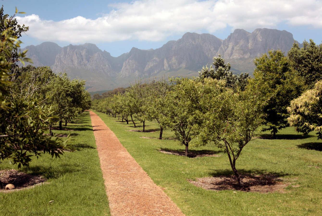 A Top Sommelier's Lowdown on the Western Cape Winelands