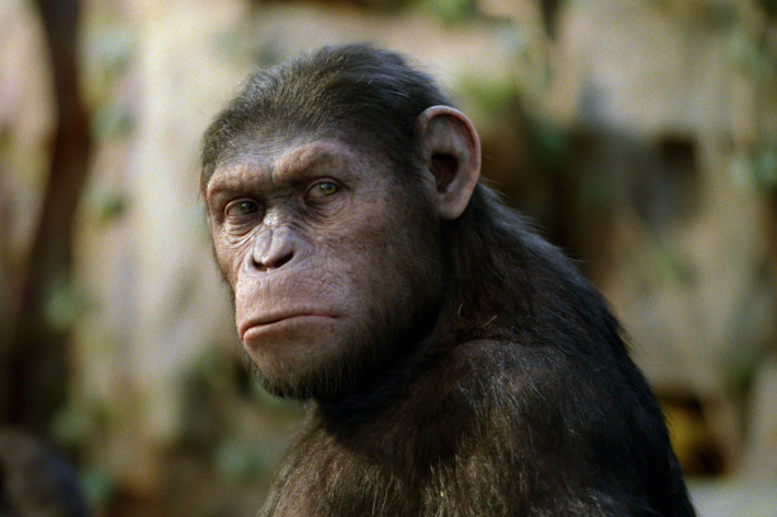 RISE OF THE PLANET OF THE APES                  The groundbreaking work of visual effects house Weta Digital allows audiences to emotionally engage with a lead character, a chimpanzee named Caesar, who does not actually exist.                  TM and ? 2011 Twentieth Century Fox Film Corporation. ?All rights reserved. ?Not for sale or duplication.