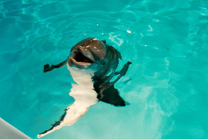 """WINTER in Alcon Entertainment's family adventure """"DOLPHIN TALE,"""" a Warner Bros. Pictures release."""