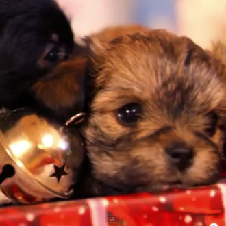 A Puppy For Christmas.Have Yourself A Puppy Little Christmas