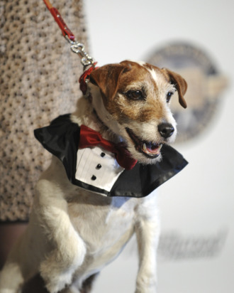 Uggie, the dog from the film