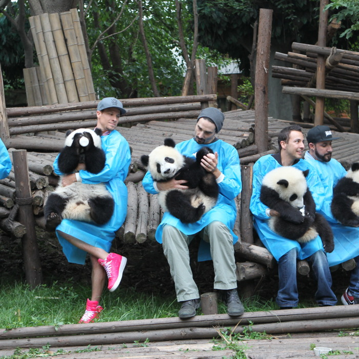 CHENGDU, CHINA - MAY 30: (CHINA OUT) Members of the Backstreet Boys hold giant pandas at the Giant Panda Breeding Research Institute during their China Tour on May 30, 2013 in Chengdu, Sichuan Province of China. (Photo by ChinaFotoPress/ChinaFotoPress via Getty Images)