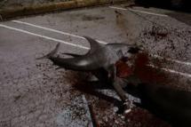"SHARKNADO -- ""Syfy Original Movie"" -- Pictured: shark attack -- (Photo by: Syfy)"