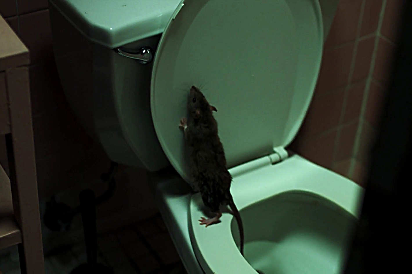 Attention, New Yorkers: This Terrifying Rat Movie Will Make You Want to Die