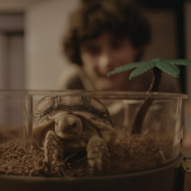 Nacho the turtle.