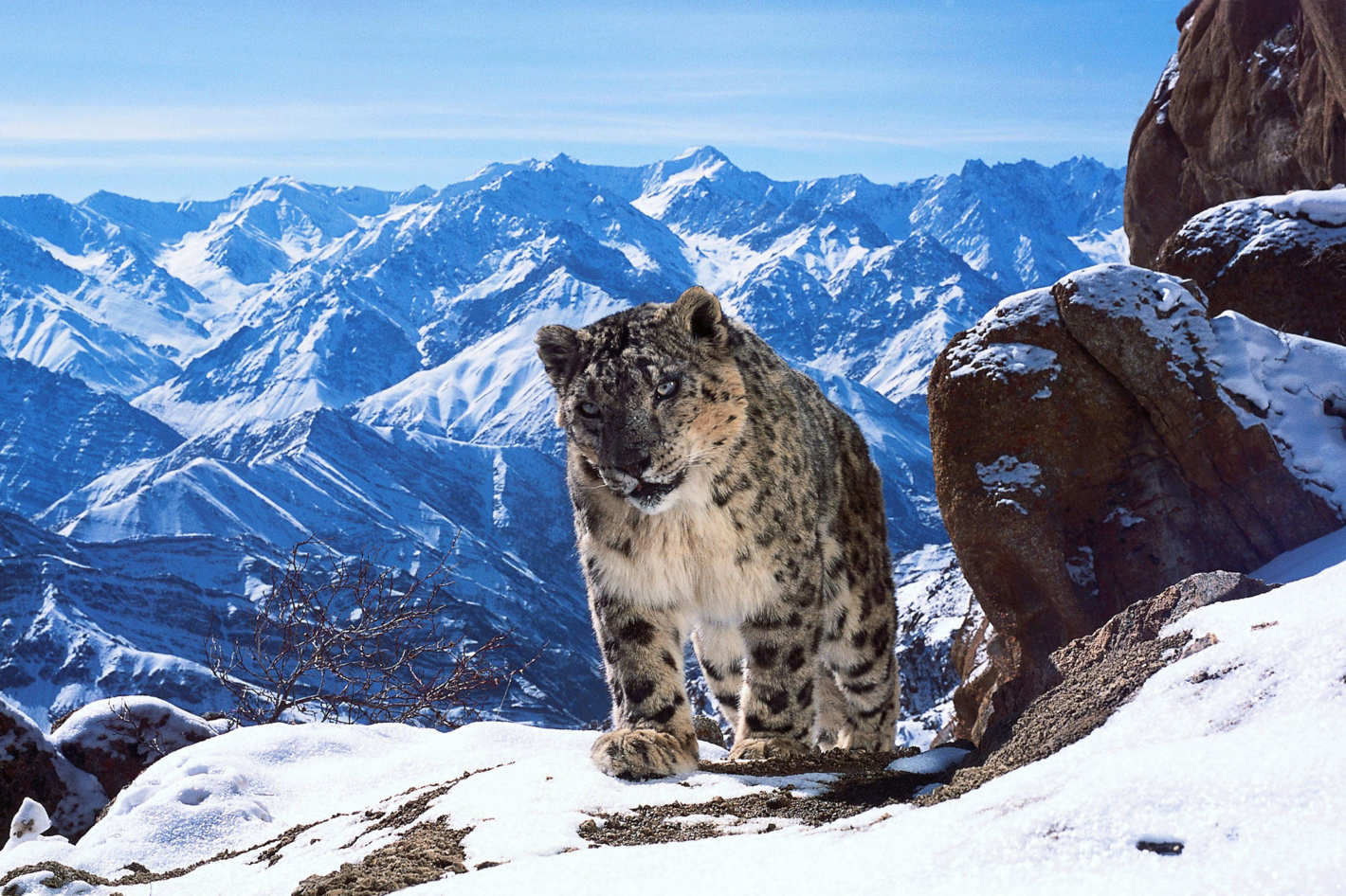 How To Watch Planet Earth Ii In 4k Ultra High Definition Video Of Be Streamed Online