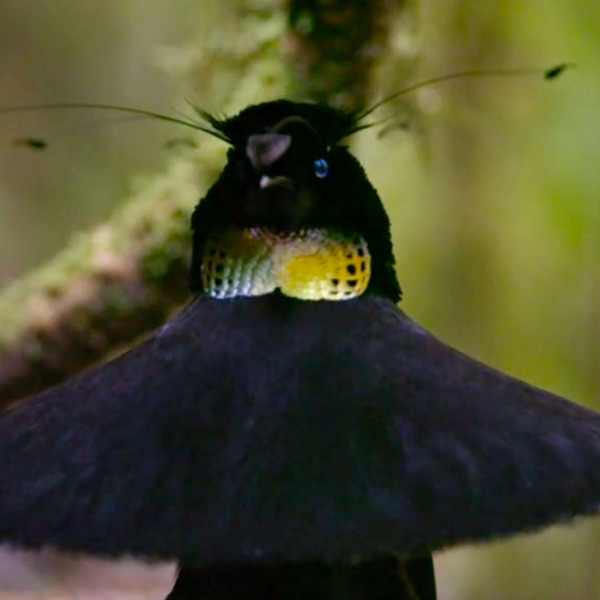 The Birds in Netflix's New Nature Doc Are Some Big Ole Freaks