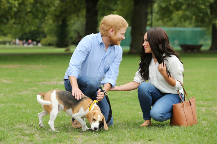 Meghan Markle and Prince Harry and dog.