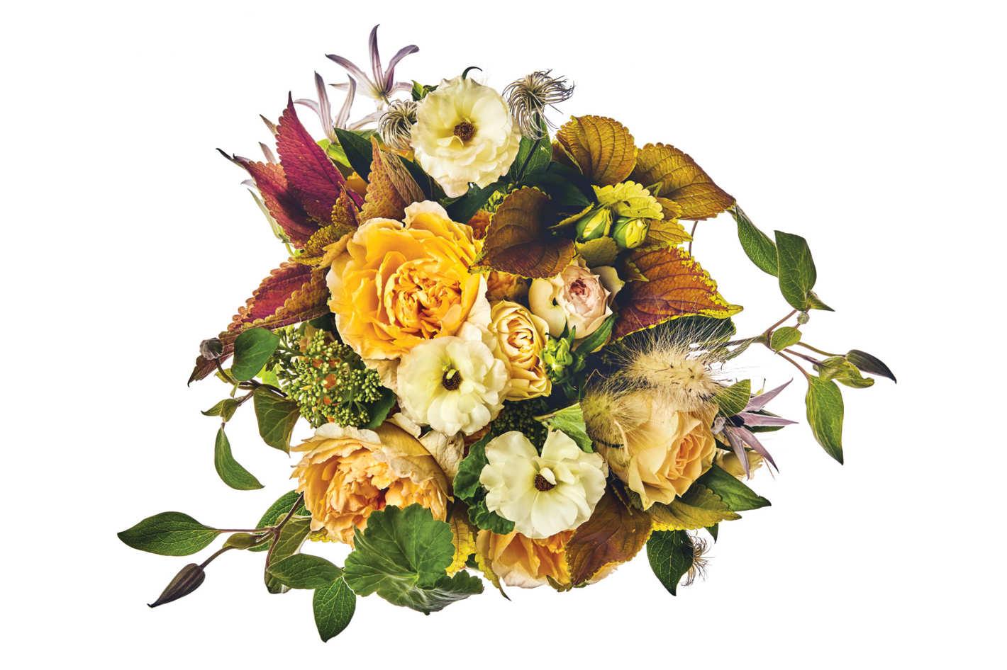 Garden rose, Butterfly ranunculus, clematis, coleus, bunny grass, and geranium foliage