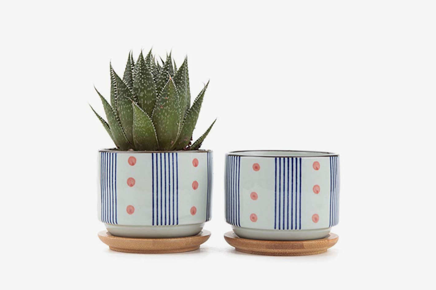 3 Inch Ceramic Japanese Style Cactus Pot