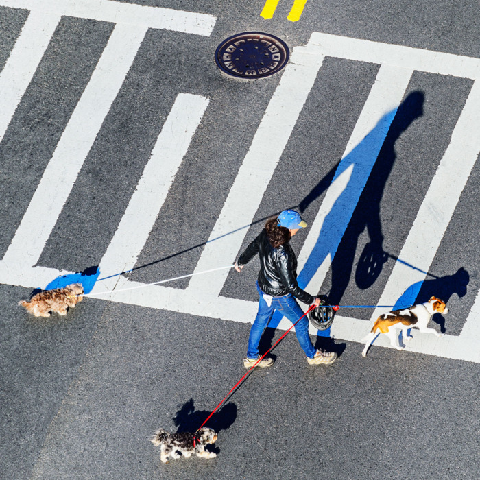 Dog walker crossing the street