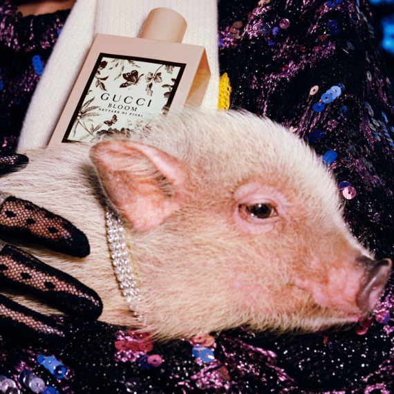 deed1c9990b2a0 Gucci Releases Year of the Pig Collection, Lookbook