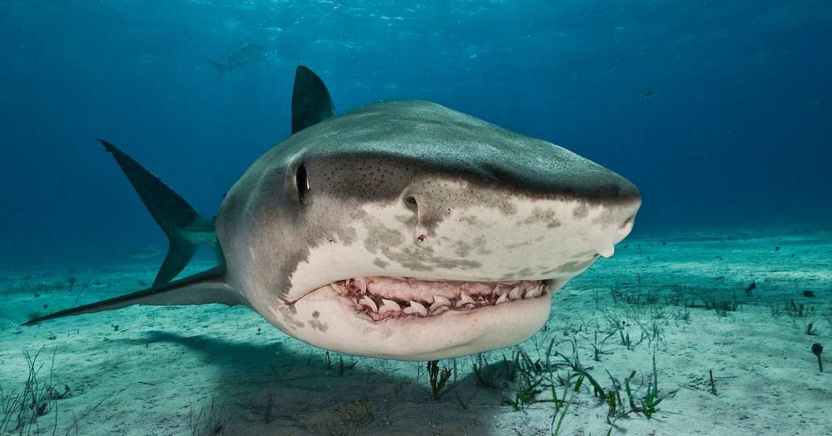 This Is the Most Horrifying Shark Story of All Time